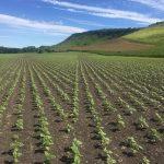 RegalFermierul.ro este ajutor de nadejde al agricultorilor